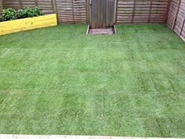 islington lawn turfing after