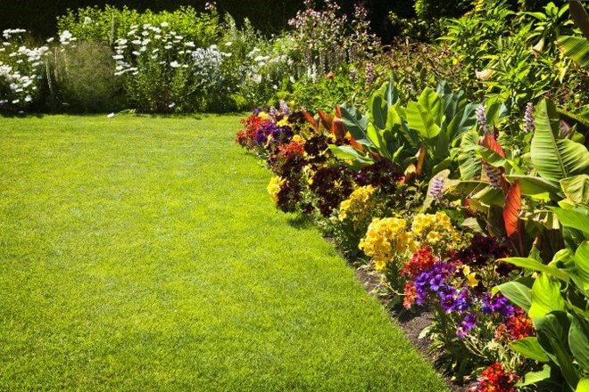 flower garden care