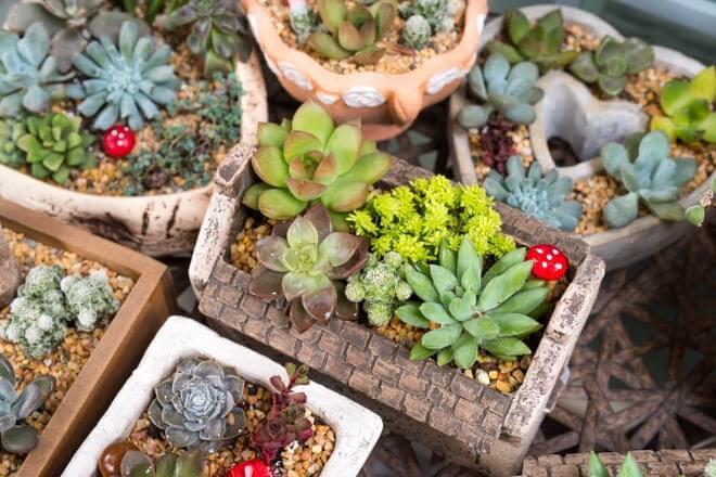 3 Creative Container Ideas for an Outdoors Succulent Garden