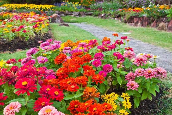10 Heat-tolerant Plants