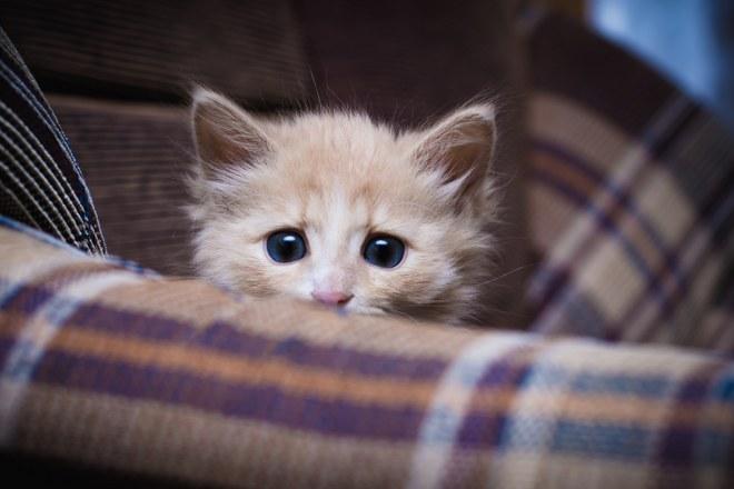 Four Poisonous Plants for Cats