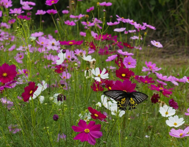 Attract Beneficial Insects for a Healthy Garden