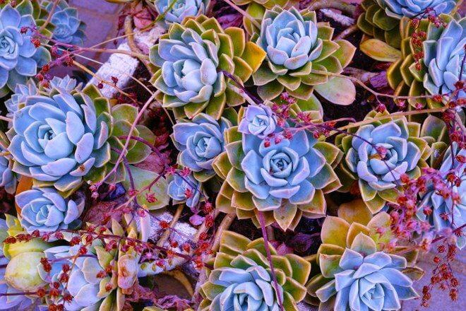 arrange plants