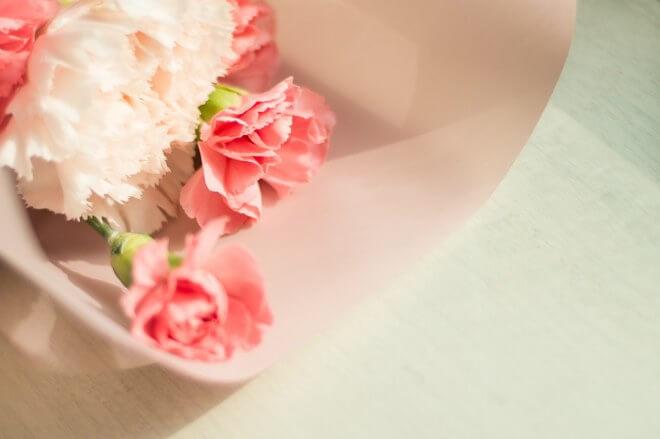 carnation gardening