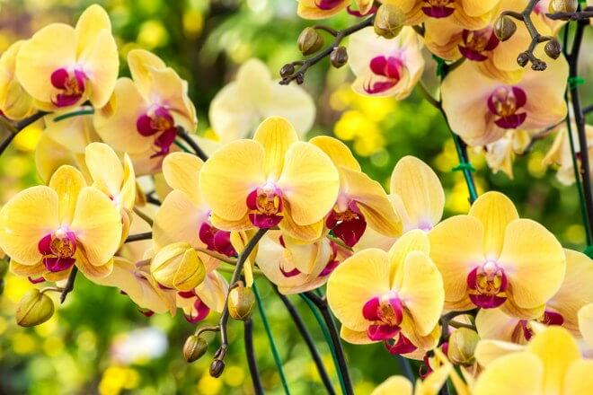Orchids garden maintenance