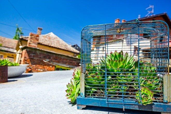 succulent garden birdcage