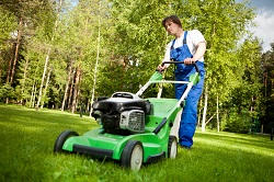 Lawn Treatment Service London