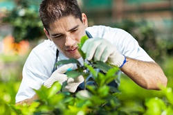 Gardening Company London