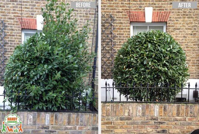 Landscaping Services in Highbury