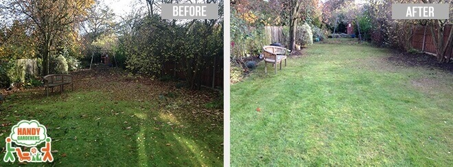 SW20 Garden Maintenance in Merton