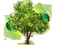 Best tree care